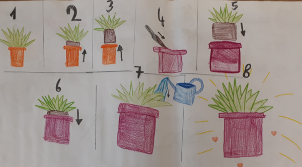 Aan de hand van een getekend stappenplan leren kinderen om planten te verpotten.